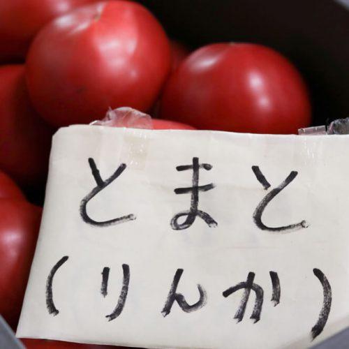 農家のトマト栽培記録「収穫」2016年7月19日
