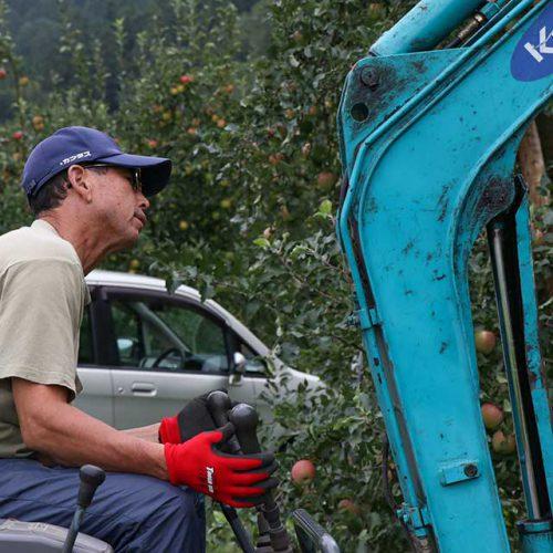 青森りんご「ふじ」わいかの木倒れる!台風10号の被害状況