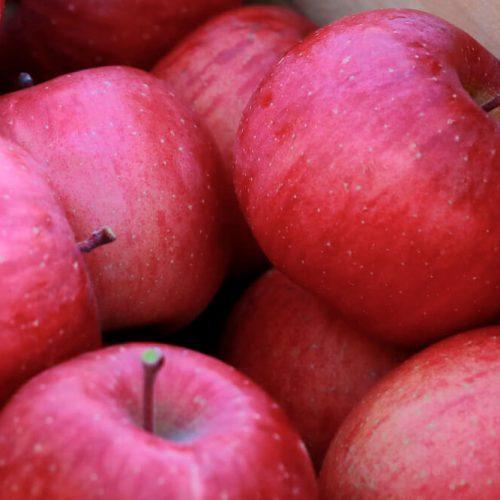 2016年もやってるよ!丸末の青森りんご販売会