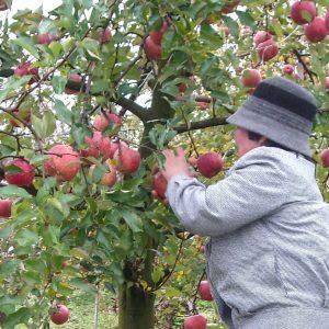 りんご祭り風景7