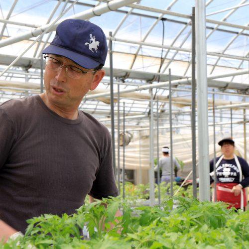 農家のトマト栽培記録「定植(ていしょく)」2016年4月19日