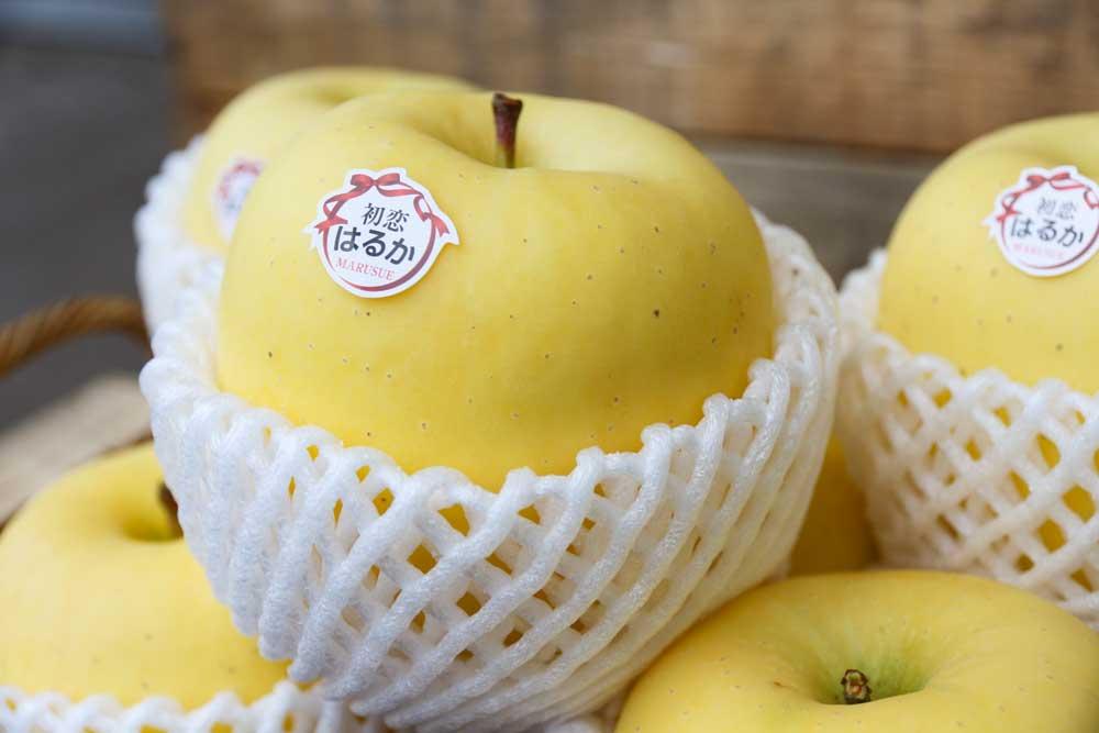 希少りんご品種はるか