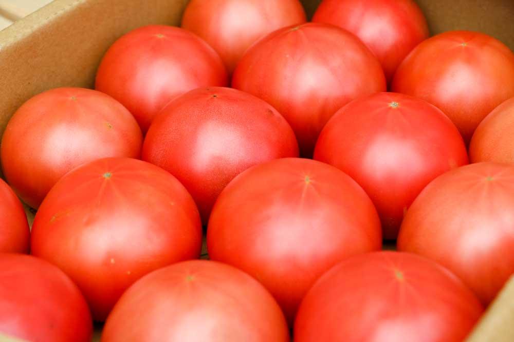 青森 トマト りんか