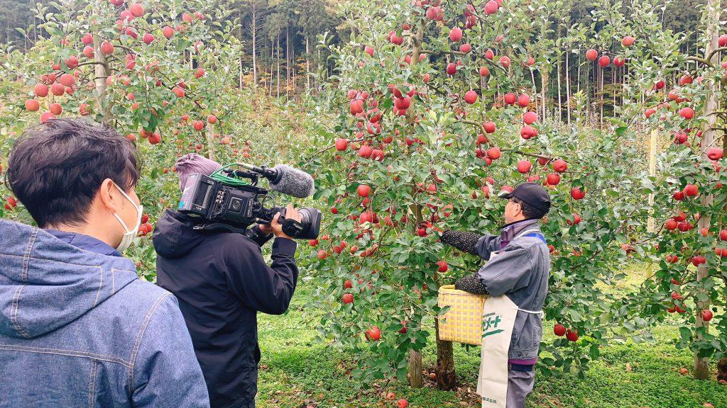 三戸 りんご