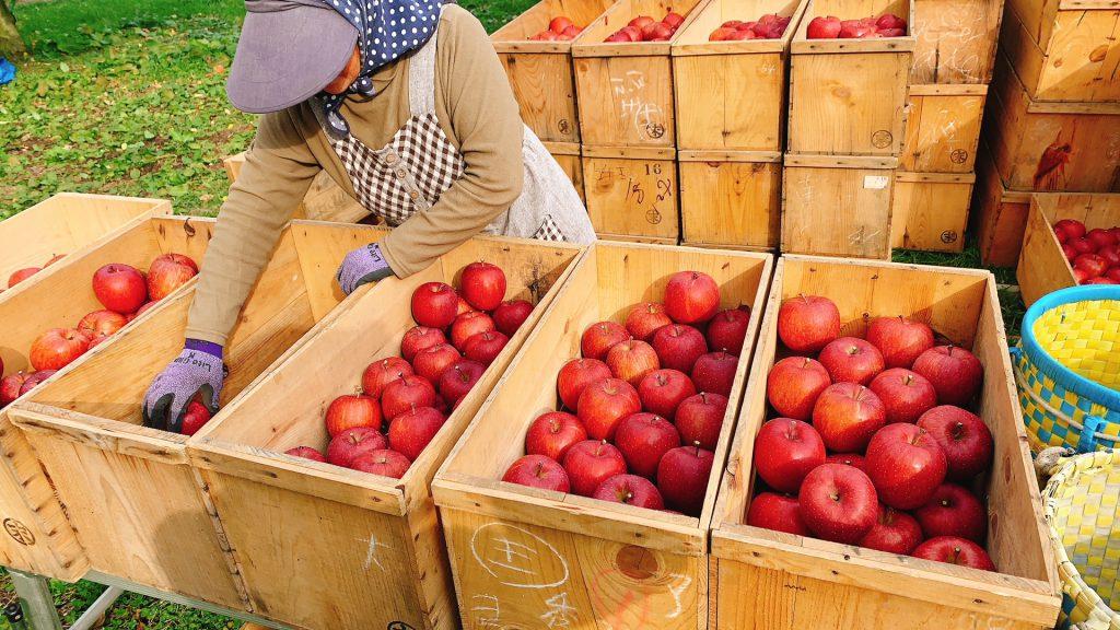 りんご直売会